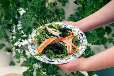 tatsoi Salad
