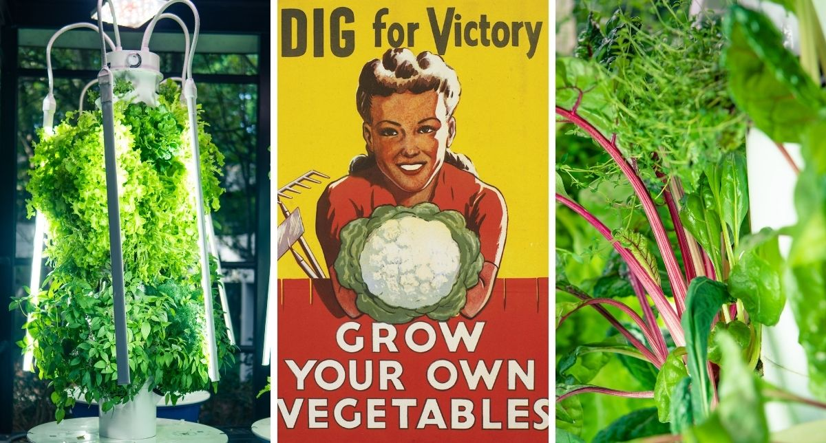 The New Take on the Victory Garden4